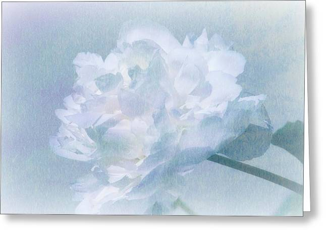 Gracefully Greeting Card by Barbara S Nickerson