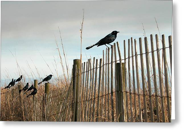 Greeting Card featuring the photograph Grackles On A Fence. by Rob Huntley