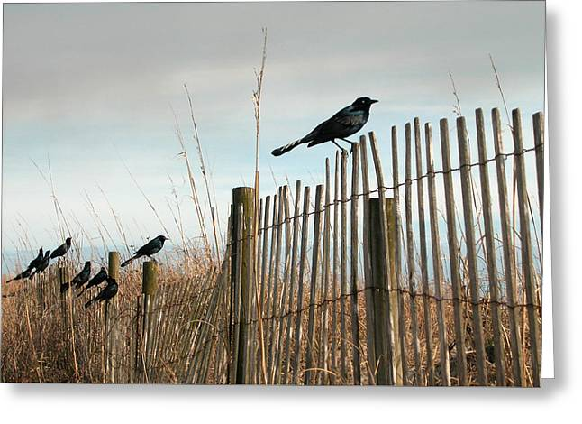 Grackles On A Fence. Greeting Card
