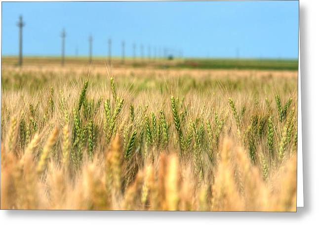 Grain Field - Hdr Photo Greeting Card