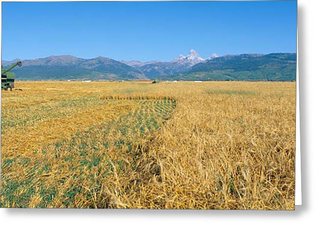 Grain Harvest, Grant Teton Mountains Greeting Card by Panoramic Images