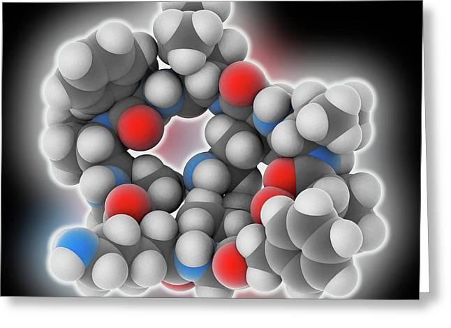 Gramicidin S Drug Molecule Greeting Card by Laguna Design