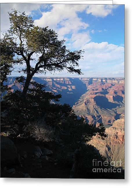 Grand Canyon Afternoon Greeting Card by Stu Shepherd