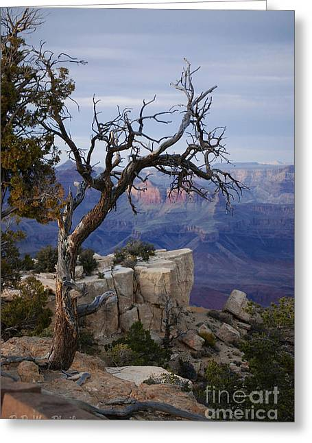 Grand Canyon Overlook Greeting Card