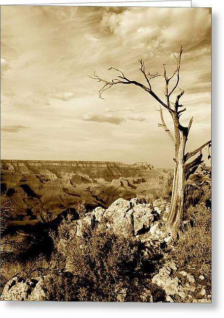 Grand Canyon Sepia Greeting Card by T C Brown