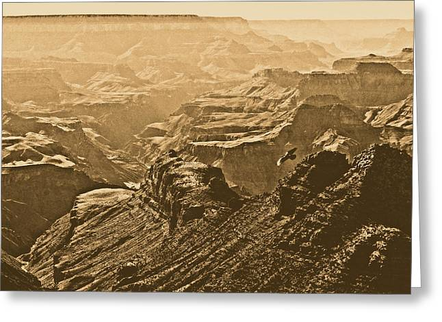 Grand Canyon Soaring Bird Of Prey Square Rustic Greeting Card by Shawn O'Brien