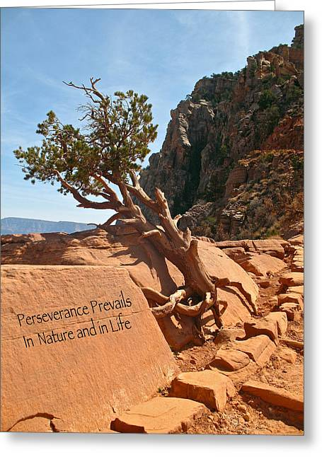 Greeting Card featuring the photograph Grand Canyon Survivor by Kathleen Scanlan