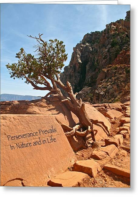 Grand Canyon Survivor Greeting Card by Kathleen Scanlan