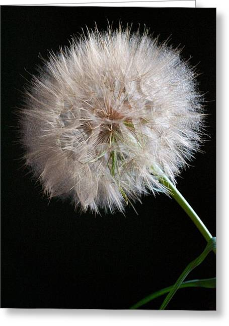 Greeting Card featuring the photograph Grand Mountain Dandelion by Kevin Bone
