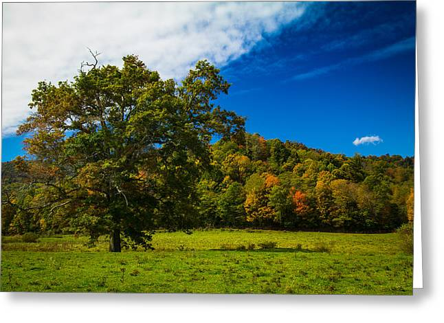 Grand Oak Greeting Card by Shane Holsclaw