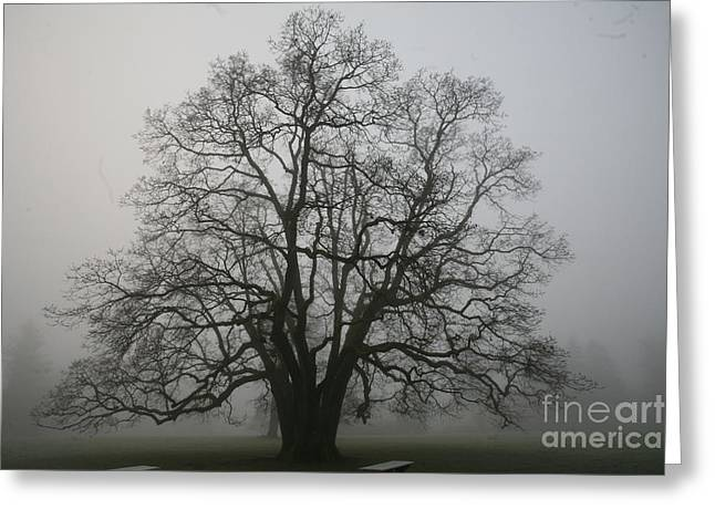 Grand Oak Tree Greeting Card by Rich Collins