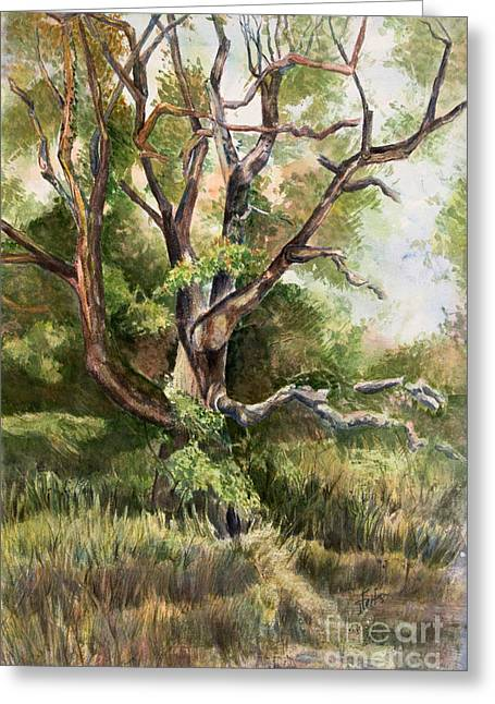 Grand Old Tree Greeting Card by Janet Felts