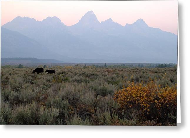 Grand Teton Moose Greeting Card by Brian Harig