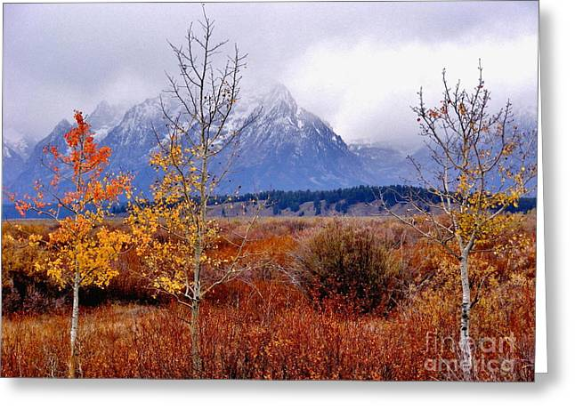 Grand Tetons Autumn Greeting Card by Marilyn Smith