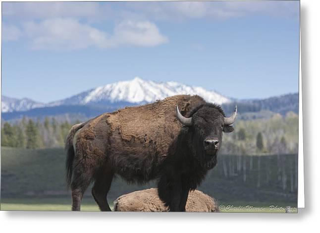 Grand Tetons Bison Greeting Card by Charles Warren