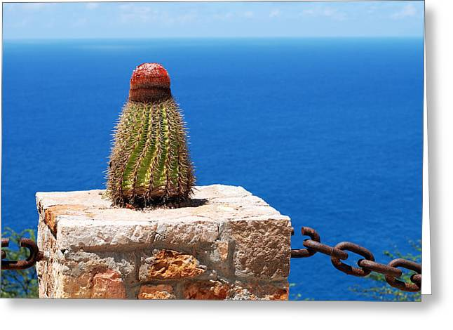 Grand Turk Cactus Greeting Card