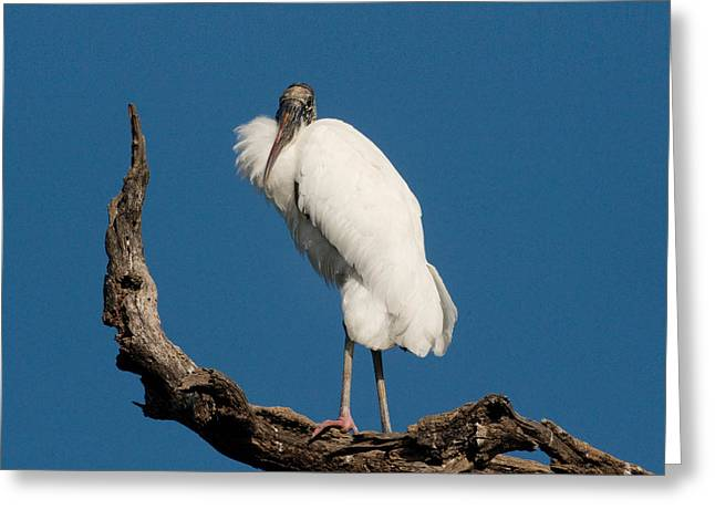 Grandfather Perched Greeting Card by Linda Olsen