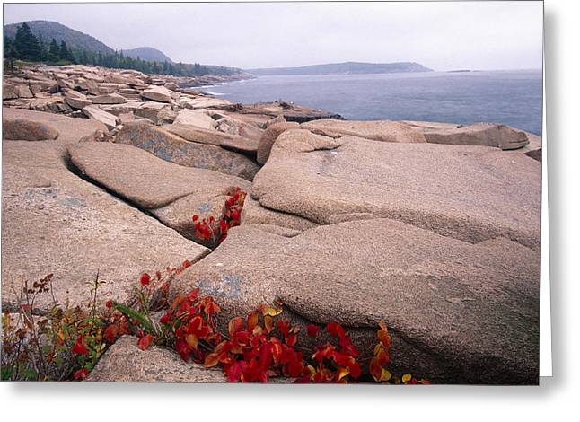 Granite Rocks Of Otter Point Acadia Natl Park Maine Greeting Card by George Oze
