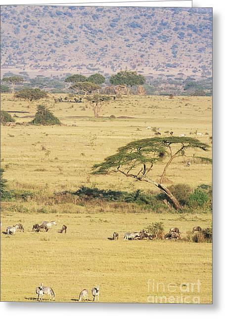 Grants Zebra And Wildebeest Greeting Card