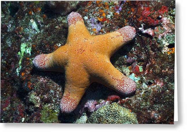 Granulated Seastar Greeting Card