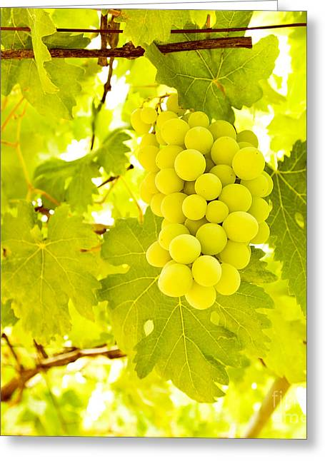 Grape Branch Greeting Card by Anna Om