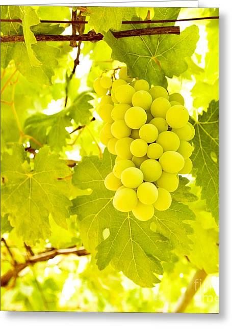 Grape Branch Greeting Card by Anna Omelchenko