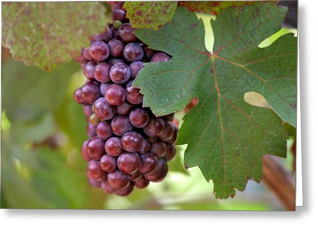 Grape Bunch Greeting Card by Art Block Collections