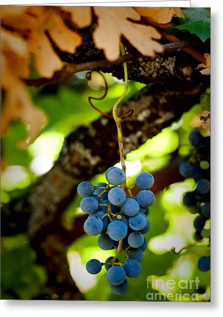Grape Cluster Greeting Card