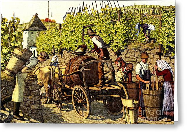 Grape Harvest 1890 Greeting Card by Padre Art