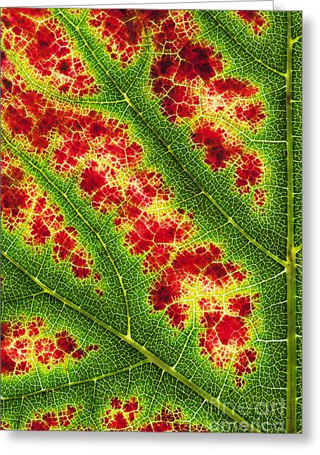 Grape Leaf Pattern Greeting Card by Tim Gainey