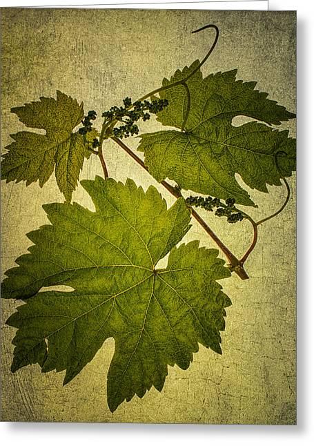 Grape Leaves Greeting Card by Paul Haist