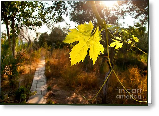 Grape Vine By A Path In A Garden Greeting Card