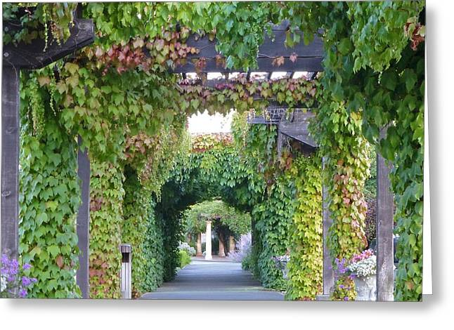 Grape Vine Covered Arbor Greeting Card