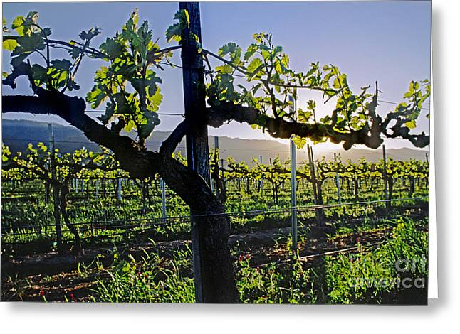 Grape Vine In Spring Greeting Card by Craig Lovell