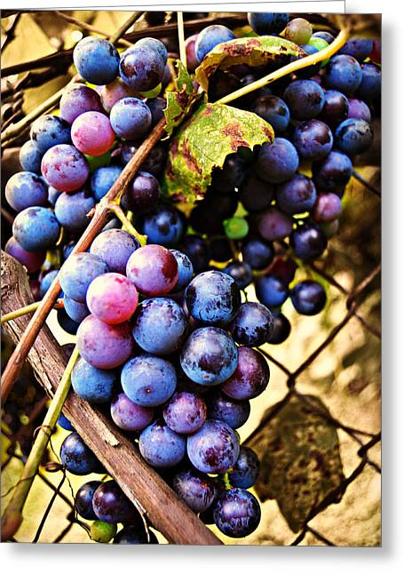 Grape Vines Greeting Card