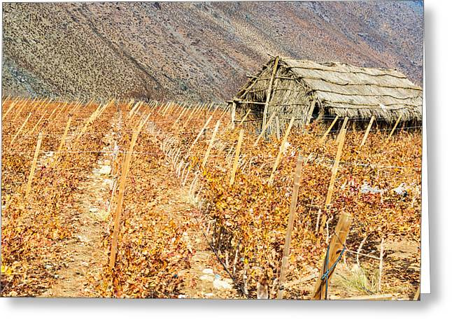 Grape Vines And Shack Greeting Card