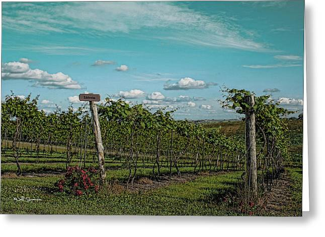Grape Vines Greeting Card by Jeff Swanson