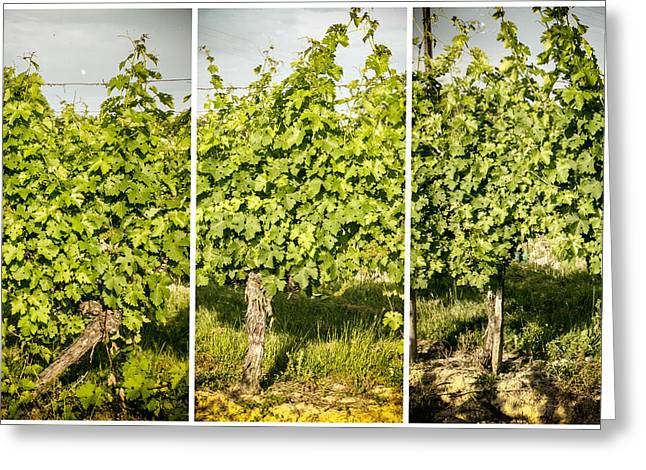 Grape Vines Triptych Greeting Card by Georgia Fowler