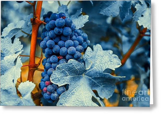 Grapes - Blue  Greeting Card by Hannes Cmarits