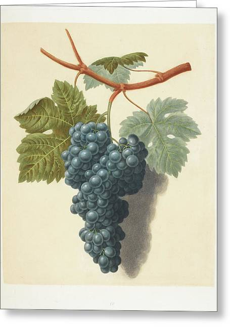 Grapes Greeting Card by British Library