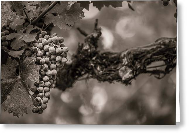 Grapes In Grey 1 Greeting Card