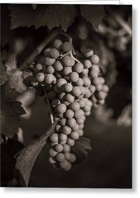 Grapes In Grey 2 Greeting Card