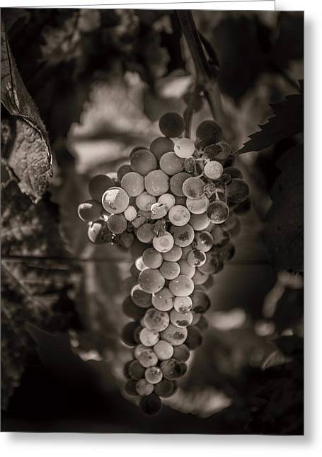 Grapes In Grey 3 Greeting Card