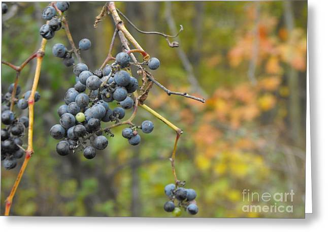 Grapes Left Greeting Card
