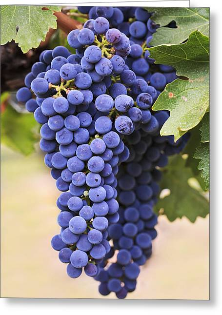 Grapes Merlot Red Wine Variety Growing Greeting Card by Ken Gillespie