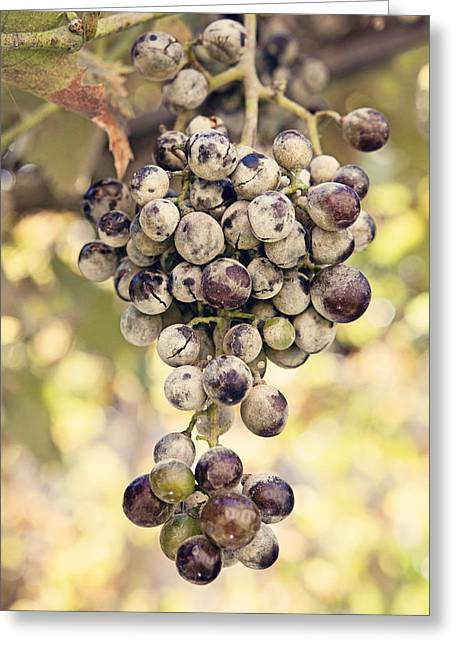 Grapes On The Vine Greeting Card by Angela Bonilla
