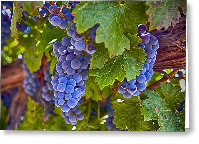 Grapes On The Vine Greeting Card by Rosanne Nitti