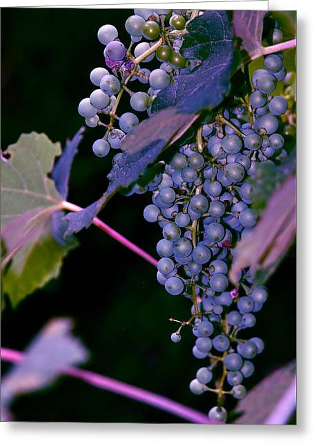 Grapes Purple And Blue Greeting Card by M E Wood