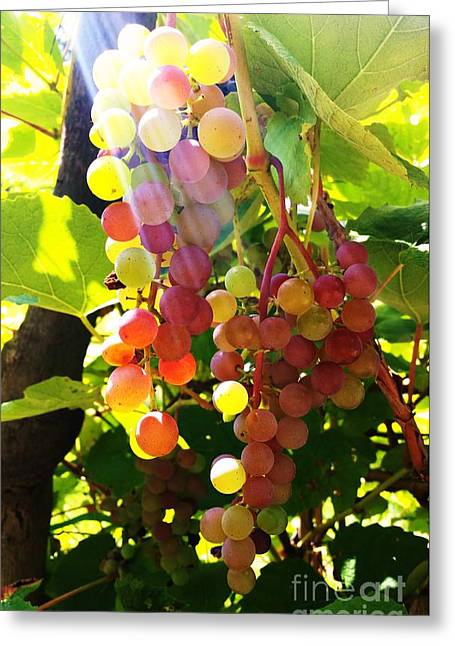 Greeting Card featuring the photograph Grapes  by Rose Wang