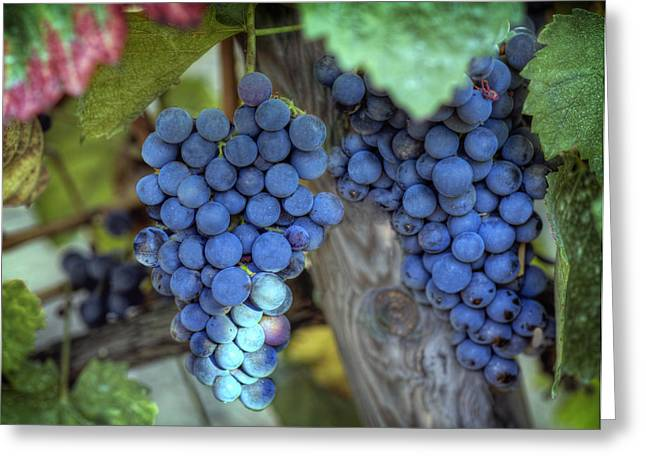 Grapevine Greeting Card by Al Hurley